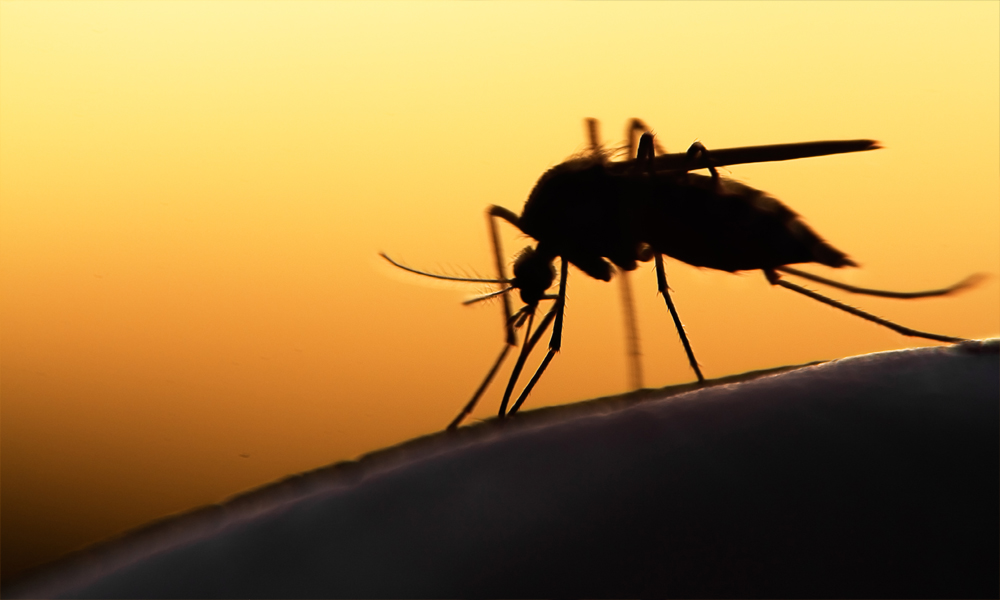 mosquito control services in Rosenberg
